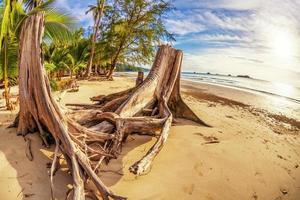 souche d'arbre sur la plage