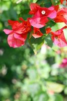 fond de fleurs azalée