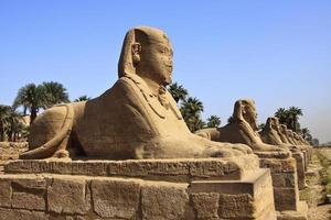 avenue des sphinx