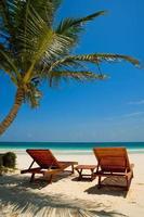 chaises de plage de palmier mer tropicale