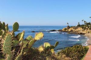 plage de cactus