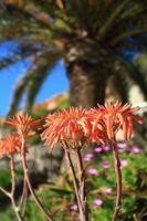 fleur tropicale photo