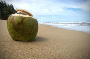 noix de coco verte assis sur une plage