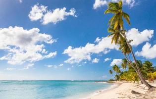 Plage des Caraïbes en République dominicaine photo
