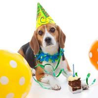 première fête d'anniversaire pour animaux de compagnie photo