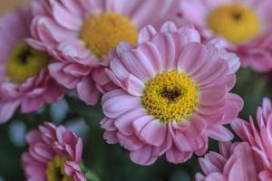 fleur avec coeur photo
