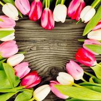coeur de tulipe photo