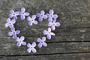 coeur lilas photo