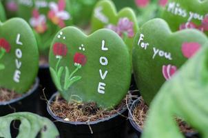 coeur de cactus photo