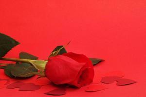 rose et coeurs
