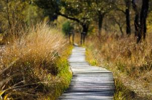 chemin en bois à travers la nature