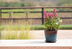 pot de fleur sur table extérieure