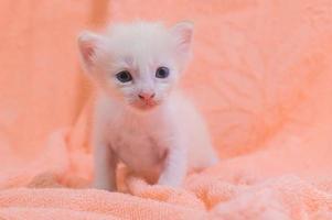 un chaton mignon sur une serviette