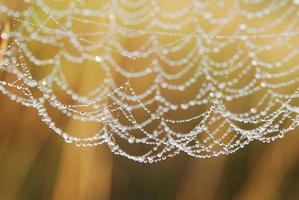 filet d'araignée avec des gouttes d'eau