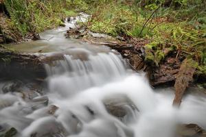 Ruisseau de la forêt tropicale du nord-ouest du Pacifique