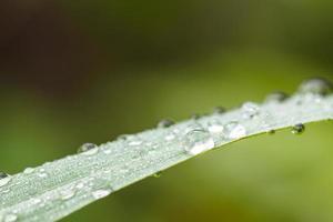 gouttes d'eau sur l'herbe verte