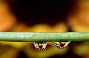 gouttes d'eau macro photo