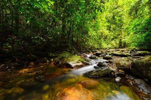 ruisseau de montagne
