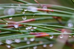 brins verts d'herbe avec des gouttelettes d'eau photo