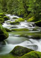 Roaring Fork Creek, parc national des Smoky Mountains