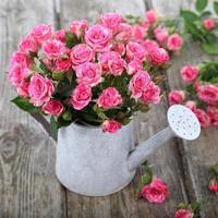 bouquet de roses dans un arrosoir