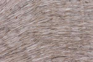 texture de toit de foin photo
