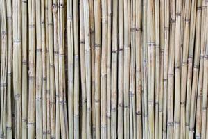 texture bois de bambou