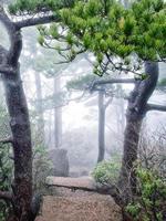 escaliers huangshan foogy photo