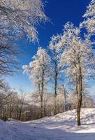 arbres sur la montagne uetliberg à zurich - suisse
