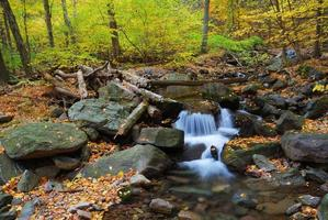 Ruisseau d'automne avec érables jaunes