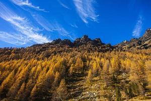 arbre typique d'automne 2 photo