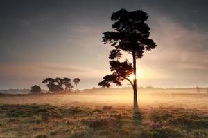 beau lever de soleil derrière un pin