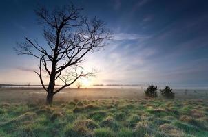 arbre sur prairie et lever du soleil