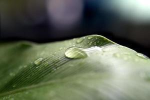 gouttelette d'eau sur feuille après la pluie