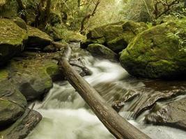 tronc d'arbre tombé sur ruisseau isolé