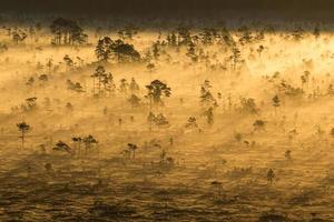 lever du soleil dans le marais photo