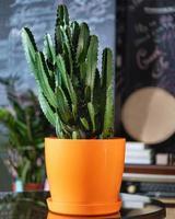 gros cactus dans un pot orange photo