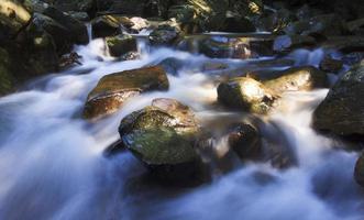 vue rafraîchissante d'un ruisseau sous les tropiques