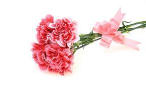 bouquet d'oeillet avec un ruban