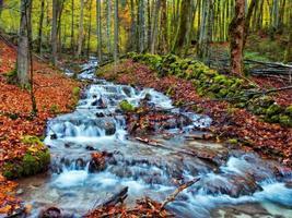 ruisseau forrest automne enchanté