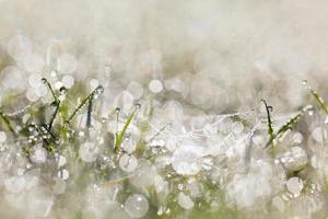Toile d'araignée avec des gouttes de rosée sur l'herbe tôt le matin