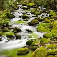 ruisseau tranquille dans les smokies