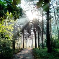 brouillard dans le bois.