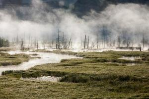 brouillard de marais photo