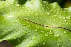vert frais après la pluie