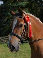 cheval gagnant