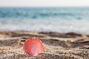 coquillage sur la plage de sable de mer photo