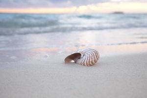 coquille de nautile sur la plage de la mer, lever du soleil. photo