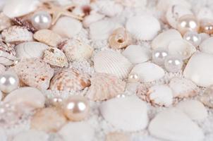 fond de coquillages et de perles photo