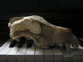 crâne de chien et piano